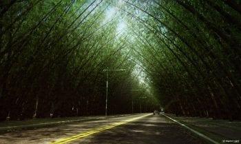 Perspectiva do Bambuzal do Greenville Etco